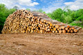 Pine timber stacked Royalty Free Stock Photo