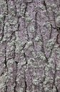 Pine Tree Bark Stock Photos
