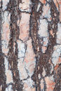 Pine tree bark natural close up Royalty Free Stock Image