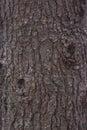 Pine Tree Bark Texture Royalty Free Stock Photo