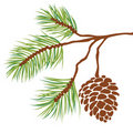 Pine tree branch and cone (vector) Royalty Free Stock Images