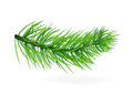 Pine tree fir tree pine branches tree christmas tree new year on a white background green line needles Stock Photo