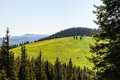 Pine Tree Forest in the Mountains on a Nice Day Royalty Free Stock Photo