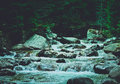 Pine tree forest river flows through the rocks. Beautiful powerf