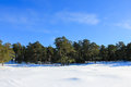 Pine tree forest view much snow baltic sea beach under blue sky Royalty Free Stock Photography