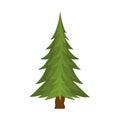 Borovice strom
