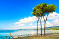 Pine tree group on the beach and sea bay background punta ala tuscany italy europe Royalty Free Stock Photos