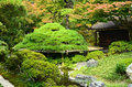Pine tree of Japanese garden, Kyoto Japan. Royalty Free Stock Photo