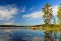 Pine tree by the lake at morning