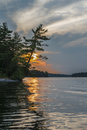 Pine tree leaning over water, sunset gold reflection Royalty Free Stock Photo