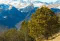 Pine tree mountains Royalty Free Stock Photography