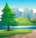 A pine tree beside the river across the tall buildings illustration of Royalty Free Stock Photo
