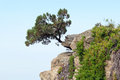 Pine tree on a rock Royalty Free Stock Photos