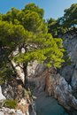 Pine tree on a rock over crystal clear turquoise water near Cape Amarandos at Skopelos island Royalty Free Stock Photo