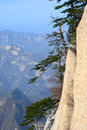 Pine tree  on the rocks Royalty Free Stock Photo