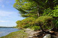 Pine tree on rocky beach leading to a bridge and power lines cross waterway connecting cousins island the mainland of maine Royalty Free Stock Images