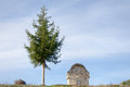 Pine tree and small stone construction