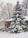 Pine tree in snow winter time toronto ontario canada Royalty Free Stock Photos