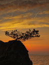 Pine tree sunset sea on the adriatic and the coast dalmatia croatia view of the cliff a rock on which to grow a little strange Royalty Free Stock Image