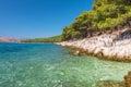 Pine Trees on the Adriatic Sea Coast near Trogir, Croatia