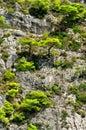 Pine trees on mountainside Royalty Free Stock Photos