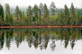 Pine trees reflected in tarn or lake scandinavian forest Stock Images