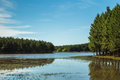 Pine trees and reflexion lake Royalty Free Stock Photography