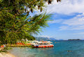 Pine trees by sea coast with pinery resort orebic dalmatia croatia Stock Photos