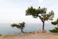 Pine trees on a sea shore in turkey Stock Photo