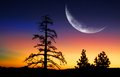 Pine Trees and Sunrise with Moon Royalty Free Stock Photo
