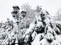 Pine Trees and Vintage Lantern covered with snow Royalty Free Stock Photo