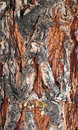 Pine Trunk Stock Photography