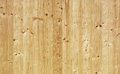 Pine wood panel texture of Royalty Free Stock Photo