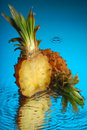 Pineapple #6 Royalty Free Stock Image
