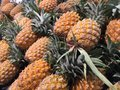 Pineapple display on shelve Royalty Free Stock Images