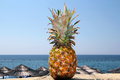 Pineapple And Exotic Beach Royalty Free Stock Images