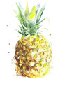Pineapple fruit handmade watercolor painting isolated on white background