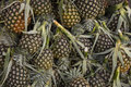 Pineapple fruit market in thailand it s more palatable the Royalty Free Stock Image