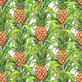 Pineapple with green leaves tropical fruit growing in a farm. Pineapple drawing markers seamless pattern on a white background. Co Royalty Free Stock Photo