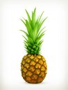 Pineapple illustration on white background Stock Image