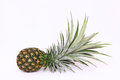 Pineapple isolate on white background Royalty Free Stock Photos