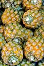 Pineapple stack of fruit with featured texture shown as raw fresh and healthy fruit or agriculture concept Stock Image