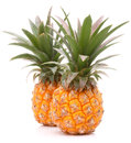Pineapple tropical fruit or ananas isolated on white background cutout Stock Photography