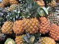Pineapple tropical fruit a lot of background Stock Image