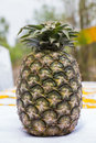 Pineapple used for homage ceremony in Royalty Free Stock Photo