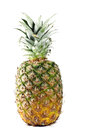 Pineapple a whole fruit of Stock Photography