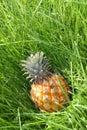 Pineapple yellow Стоковые Изображения