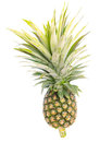 Pineapples isolated on white background for multipurpose Royalty Free Stock Image