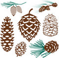 Pinecone Collection Royalty Free Stock Photography