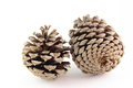 Pinecones two on white background Stock Photography
